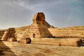 Sphinx — Stock Photo