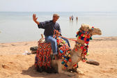 Egyptian man posing on the camel — Stock Photo