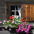 Stock Photo: Flower Window