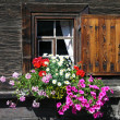 Foto de Stock  : Flower Window