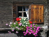Finestra di fiore — Foto Stock