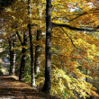 Autumn — Stockfoto #2285656