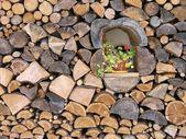 Catasta di legna — Foto Stock