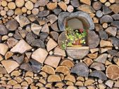 Woodpile — Stockfoto