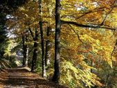 Autunno — Foto Stock