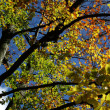 Foto Stock: Fall Colors