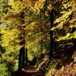 Autumn sun — Stock Photo