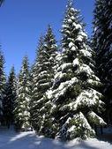 Forêt d'hiver — Photo