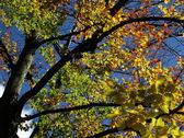 Kolory jesieni — Zdjęcie stockowe