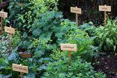 Spezie ed erbe aromatiche — Foto Stock