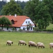Cottage and sheep — Stock Photo #2350716
