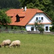 Cottage and sheep — Stock Photo #2351177