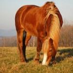 Horse pasture — Stock Photo