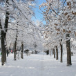Park landscape in winter — Stock Photo #2263619