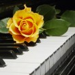 Rose over piano key — Stock Photo