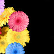 Royalty-Free Stock Photo: Flowers on  black as background