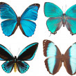 Some various butterflies isolated on whi — Stock Photo