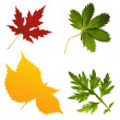 Stock Photo: Collection of leafs