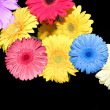 Flowers on  black as background — Stock Photo