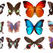 Some various butterflies isolated on  wh - Stock Photo