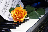 Rose on musical note — Stock Photo