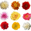 Collection of flower isolated XXXL — Stock Photo #2332265