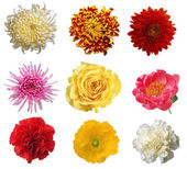 Collection of flower isolated XXXL — Stock Photo