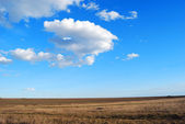Yellow field on blue sky background — Stock Photo