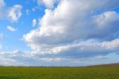 Green field on blue sky background — Stock Photo