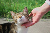 Hand stroking the cat — Stockfoto