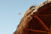 Thatched roof on blue sky background — Stockfoto