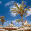 Foto Stock: Thatched sunshade and palm trees