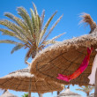 Foto Stock: Thatched sunshades and palm trees