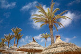 Thatched sunshade and palm trees — Stockfoto