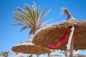 Thatched sunshades and palm trees — Stock Photo