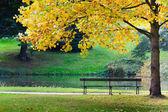 Empty bench in park — Stock Photo