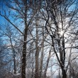 Sunbeam in blowing snow around trees — Stock Photo