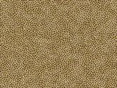 Jaguar fur texture — Stock Photo