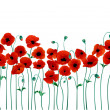 Red poppies - Stok Vektör