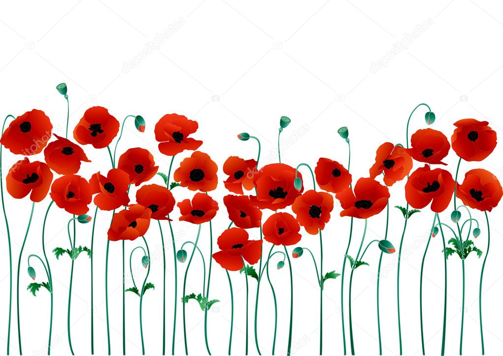 Vector illustration of beautiful red poppies — Stock Vector #2264550