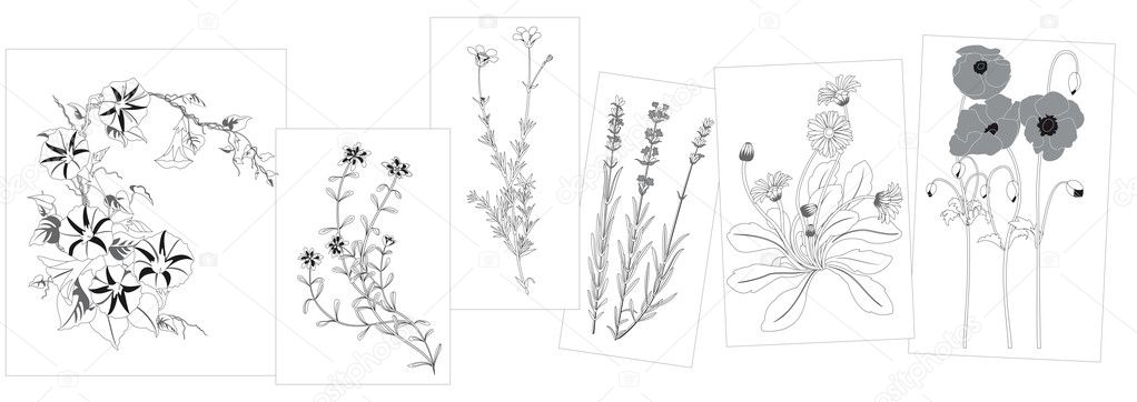 Set of wild flowers in black - elements for design -  illustration — Stock Vector #2264721