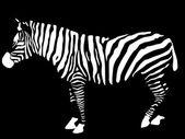 Зебра — Cтоковый вектор