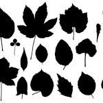 Leaf vector — Stock Vector #2614109