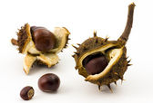 Newborn autumn chestnuts — Stock Photo