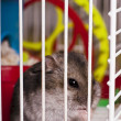 Hamster  in cage — Stock Photo