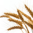 Wheat — Stock Photo #2389601