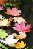 Autum leaves — Stock Photo