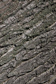 Wood crust texture — Stock Photo