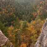 Autumn forest — Stock Photo #2397905