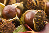 Autumn chestnuts — Stock Photo